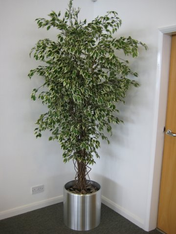 office plant displays. Using Live Exterior Planting Can Sometimes Be Problematic, Especially In The Warmer Summer Months. If Not Regularly Maintained, Trees Easily Dry Office Plant Displays