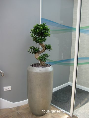 office plant displays. Plants Indoors Also Help To Satisfy Our Innate Need Connect With Nature Especially As Many Of Us Spend Most Working Hours Indoors. Office Plant Displays
